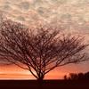 ホプキンスビル の夕焼けはただただ美しい… 夕陽は明日への希望を実感します。