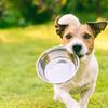 【無添加】私がAmazonで購入している定番の犬用おやつ5選