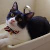 今日の黒猫モモ&白黒猫ナナの動画ー575