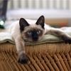 猫とコタツの関係性からコタツを使う時の注意点や猫の面白い寝方について