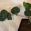観葉植物のポリシャス・バルフォウリアナの間延びしてしまった空間が100均グッズで可愛く早変わり!