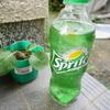 【実験】ブロッコリーの苗をスプライトで育ててみた結果・・・