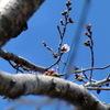 サクラ&春のお花 (鹿児島県 霧島市 プリザーブドフラワー ハートローズ)