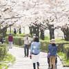 埼玉県桜めぐり