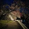 わたらせ渓谷鐵道、春の花見めぐり(桜、花桃)