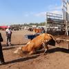 ウイグル自治区 カシュガルにて カシュ到着、アニマルマーケットは面白い