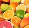 グレープフルーツ(単体)