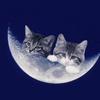 【月光燻】〜月に変わってお料理よっ!旨いとイワシてみようぞ〜