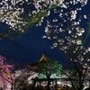 夜の東寺 ぱぁ〜と 5 (fourは存在しない)
