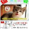 本日「猫のお見合い会」開催
