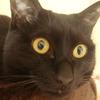 今日の黒猫モモさんの動画ー474