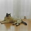 世界猫の日記念 ~もしもマオが〇〇だったら~