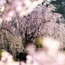神々の楽園日本