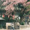 桜とカメラ