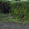 ニガウリの除草