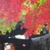 京都旅行の写真