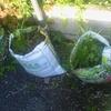 売土の袋をそのままに植物を育てる