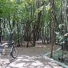 川西市に新しく出来た勝福寺古墳散策路を自転車で散策
