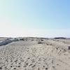 ウミガメがいる!中田島砂丘の楽しみ方を地元ライターがドドんと解説!