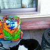 おはよう!むーちゃん!外猫と愛猫