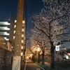 夜桜お花見ラン