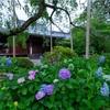 京都・花園 - 初夏の花咲く法金剛院