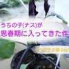 ナス【真黒早生茄子】がトゲトゲしい~播種から5週間~ベジヲタ畑 Day35