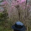 和宏さんの花巡礼「躑躅花」 風に咲く