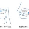 アメリカ英語の発音ノウハウ (2) ~ 舌のホームポジション