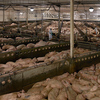 大量生産された肉と、丁寧に飼育された肉