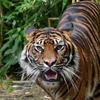 「虎にならずに教師になった」〜教師の本懐