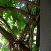 台風の爪痕とわがやの木