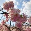 2018年「桜」まとめ…(和歌山)