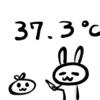 37.3℃