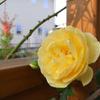 秋のバラ開花 ~その1~