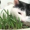 ミニマリストの持ち物?! ~猫草~