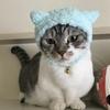 猫の「夜の運動会」に悩む方へ。超おすすめ!電動で動く猫のおもちゃ!