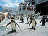 夏でも過ごしやすくて、しかもお得! おすすめの水族館&動物園