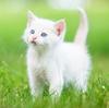 猫がかわいい理由!自覚はしてるの?