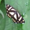 蝶と蛾の簡単な見分け方は?一般的な見分け方が正しいのかも検証