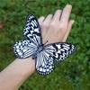 蝶々を結ぶ曲