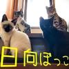 猫が集団で日向ぼっこ!子猫3兄弟と3姉妹が暖をとりに階段に集合!
