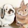 YOU+MORE!のウサギグッズが愛くるしい~フェリシモ~
