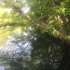 流れる水の様に。変化に柔軟でいたい