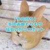 たにログ223 【多肉狩り】福島駅近辺の多肉狩りスポット3選!あべ園芸・ガーデンプラザ華!