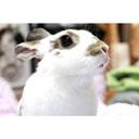 らぶ・らびっと・らいふ-Love Rabbit Life-