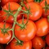 【レシピあり】トマトの栄養素知ってる?野菜の知識をつけて健康になろう!
