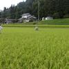 採種田の自主検査