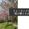 ウォーキングがてら桜を観てきました