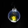 【工作動画】ヒヨコのテラリウムライトを作ってみた